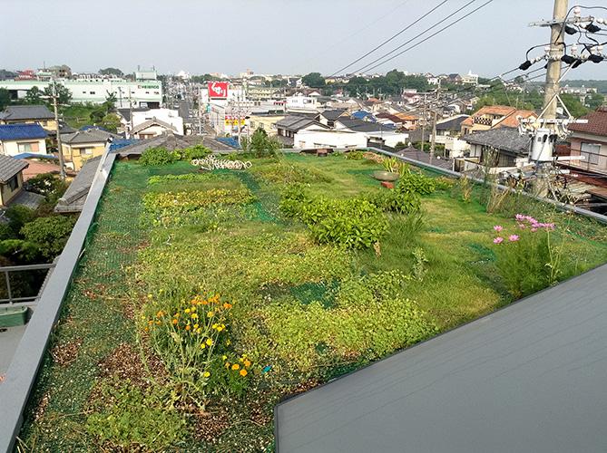ほら貝の家_屋根緑化